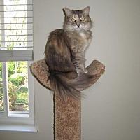 Adopt A Pet :: Hannah - San Jose, CA