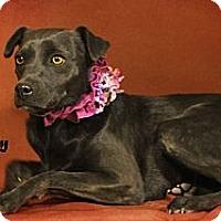 Adopt A Pet :: Dory - Kerrville, TX