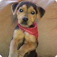 Adopt A Pet :: Austin/Kebab - Newark, DE
