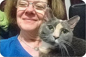 Domestic Shorthair Cat for adoption in Atlanta, Georgia - Punky