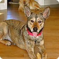 Adopt A Pet :: Rosa - Surrey, BC