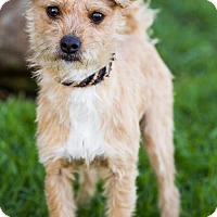 Adopt A Pet :: Marlow - San Diego, CA