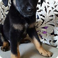 Adopt A Pet :: Arnold - Cleveland, OH
