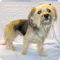 Adopt A Pet :: 17-d03-002 Journey - Fayetteville, TN