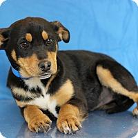 Adopt A Pet :: Master - Waldorf, MD