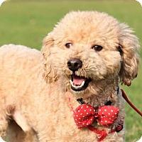 Adopt A Pet :: Morgan - San Francisco, CA