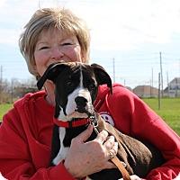 Adopt A Pet :: Meeko - Elyria, OH