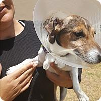 Adopt A Pet :: Lilly lou - Palm Bay, FL