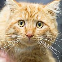 Adopt A Pet :: ANDY - Pt. Richmond, CA