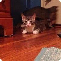 Adopt A Pet :: Aqua - New York, NY