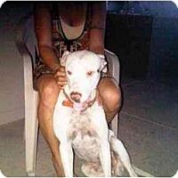 Adopt A Pet :: Happy - Scottsdale, AZ