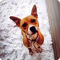 Adopt A Pet :: Kowalski~ADOPTED! - Lapeer, MI