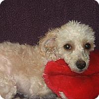 Adopt A Pet :: Annablle-WATCH MY VIDEO!!!! - Irvine, CA