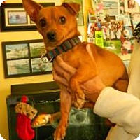 Adopt A Pet :: Butch - Jacksonville, FL