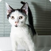 Adopt A Pet :: Gizmo - New York, NY
