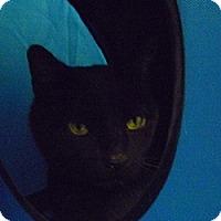 Adopt A Pet :: Rufus - Hamburg, NY