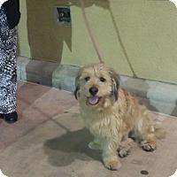 Adopt A Pet :: Rockii - Santa Ana, CA