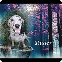 Adopt A Pet :: Ruger - Crowley, LA