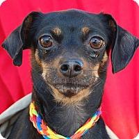 Adopt A Pet :: Francine - Las Vegas, NV