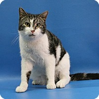 Adopt A Pet :: Shadow - Overland Park, KS