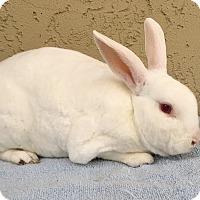 Adopt A Pet :: Charlie - Bonita, CA