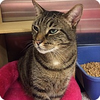 Adopt A Pet :: Big Boy-Adoption Pending! - Colmar, PA