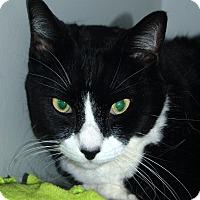 Adopt A Pet :: Tyler - Sarasota, FL