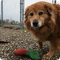 Adopt A Pet :: Sheba - Grinnell, IA