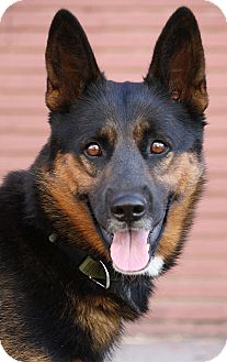 German Shepherd Dog Mix Puppy for adoption in Los Angeles, California - Princess von Pretty