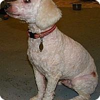 Adopt A Pet :: Sonny - South Amboy, NJ