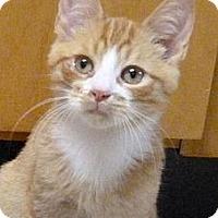 Adopt A Pet :: Motoriffic - Bedford, MA