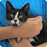 Adopt A Pet :: Lex - Riverhead, NY
