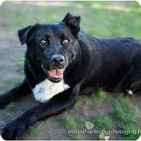 Adopt A Pet :: DESPERADO - Phoenix, AZ