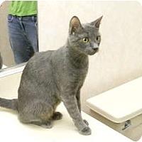 Adopt A Pet :: Felicia - Naples, FL