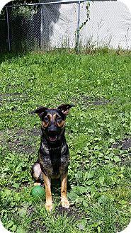 Shepherd (Unknown Type) Mix Dog for adoption in Port Coquitlam, British Columbia - Celeste