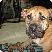 Adopt A Pet :: MUDDY - Port Clinton, OH
