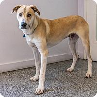 Adopt A Pet :: Theodore - Long Beach, CA