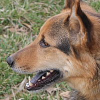 Adopt A Pet :: Gypsy - Portland, IN