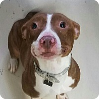 Adopt A Pet :: Fiona - Long Beach, NY
