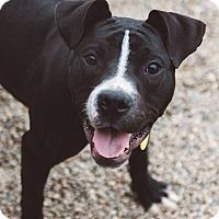 Adopt A Pet :: Flynn - Cleveland, OH