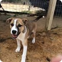 Adopt A Pet :: Sophie - Rexford, NY
