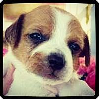 Adopt A Pet :: Potter - Grand Bay, AL