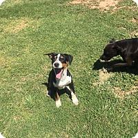 Adopt A Pet :: Tucker - Snyder, TX