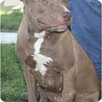 Adopt A Pet :: Tia - Seattle, WA