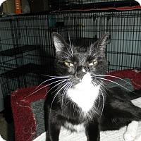 Adopt A Pet :: Primrose - Milwaukee, WI