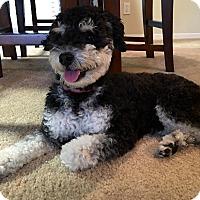 Adopt A Pet :: Louie - Cerritos, CA