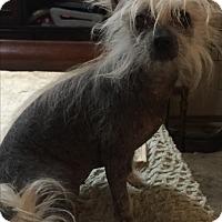 Adopt A Pet :: Pigly - Blanchard, OK