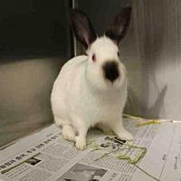Adopt A Pet :: A1685274 - Los Angeles, CA