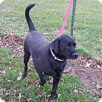 Adopt A Pet :: Lincoln - Foristell, MO