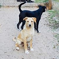 Adopt A Pet :: Paris - San Antonio, TX